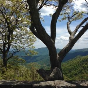 Shenandoah Valley3