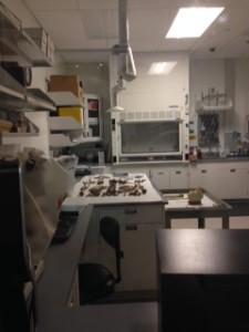 museum lab