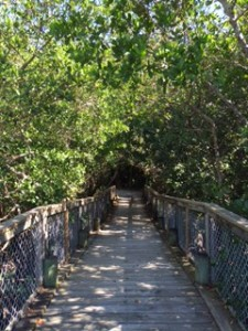 mangrove bridge